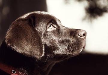 dog-6-360x250-e1478015983224